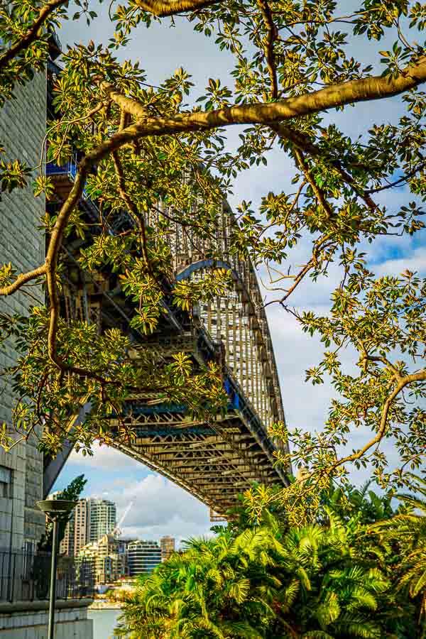 Sydney Harbour Bridge Trees